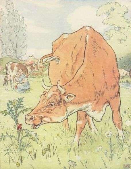 palcek-tom-krava