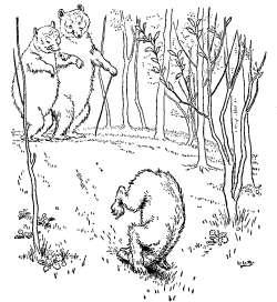 trije-medvedi-na-sprehodu
