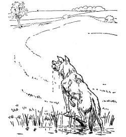 trije-prasicki-volk-lovi-pujska